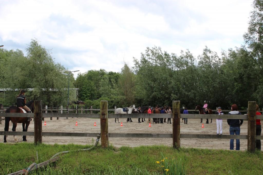 praktijk tijdens de opleiding paardenrevalidatietrainer
